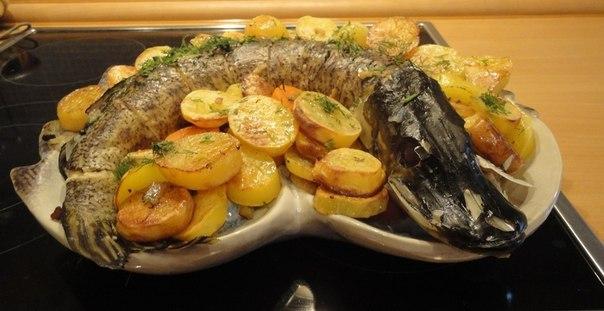 Щука приготовление блюд с фото рецепты